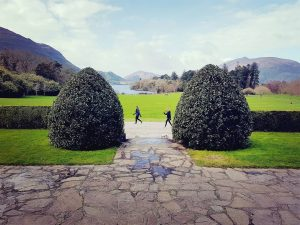 Destination Killarney - Muckross House Trees