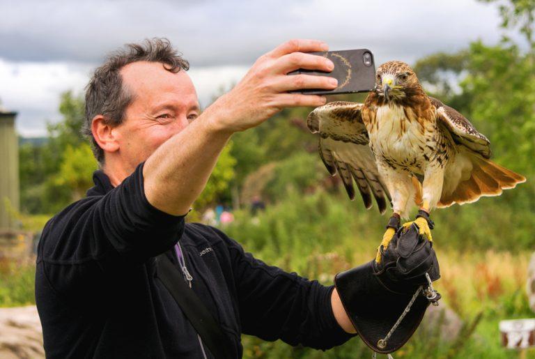 Destination Killarney - Falconry Selfie